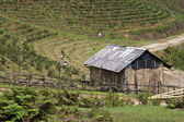 Agriculture at mountains near Sapa — Stock Photo