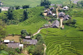 Paddy fields and small villages — Stock Photo