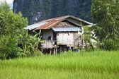 Village in Laos — Stock Photo