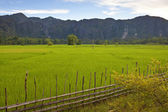Countryside in central Laos — Stock Photo