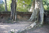 Ruins of ancient Angkor temple Ta Phrom — Stock Photo