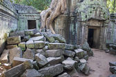 Ruins of ancient Angkor temple Ta Phrom — Foto de Stock