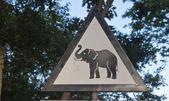 Elephant warning sign — Stock Photo