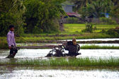 Peasant plows his paddy field — Stock Photo
