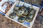 Horseshoe crabs for sale — Stok fotoğraf