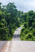 Road at Khao Yai National Park — Stock Photo