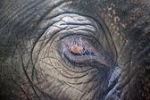 Dettaglio dell'occhio di un elefante — Foto Stock