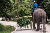 Mahout ride an elephant  — Stock fotografie