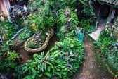 Garden of a village house — Stock Photo