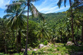 Palm forest at Koh Phangan island — Stock Photo