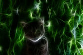 Cat. Abstract Wallpaper — Stock Photo