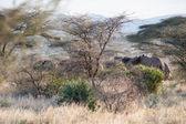 Elephant herd — Stock Photo