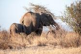 Africa — Stok fotoğraf