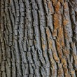 Texture closeup shot of brown tree bark — Stock Photo #21389403