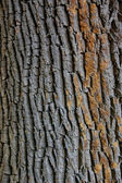 Texture closeup shot of brown tree bark — Stock Photo