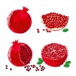 Vector illustration of pomegranate fruits — Stock Vector #29060905