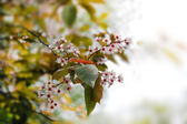 Spring flowers on a branch — Stok fotoğraf