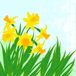 Vector card with daffodils on textured background. — Stock Vector