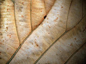 Dried leaf fine details and very high-res for backgronds — Stock Photo