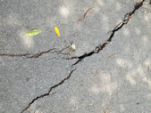 Old wet worn and cracked asphalt with cracks — Stock Photo