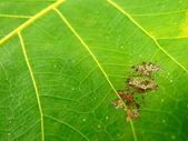 Green leaf macro background — Stock Photo