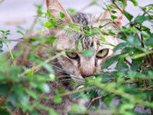 Cat is looking from behind a tree — Stock Photo