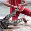 Person performing stunt with alligator — Stock Photo #40913827