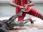 Person performing a stunt with alligator — Stock Photo