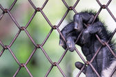 Hand monkey on cage — Stock Photo