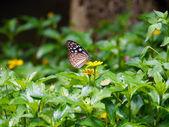 голубая бабочка летать в природе утро — Стоковое фото