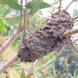Ants nest in a tree — Stock Photo #44160241