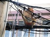 Monkey in Lop Buri Province Thailand  — Stock Photo
