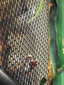 Opice v kleci — Stock fotografie