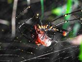 Spinne Angriffe Opfer — Stockfoto