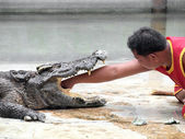 SAMUTPRAKARN,THAILAND -SEPTEMBER 8: crocodile show at crocodile farm on September 8, 2013 in Samutprakarn,Thailand. This exciting show is very famous among among tourist and Thai people — Stock Photo