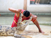 SAMUTPRAKARN,THAILAND - DECEMBER 21: crocodile show at crocodile farm on December 21, 2013 in Samutprakarn,Thaila nd. This exciting show is very famous among among tourist and Thai people — Stock Photo