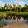 Lake in the Forest and Trees Reflection near Moscow, Russia — Stock Photo
