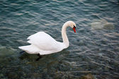 Beautiful Swan Gliding on Transparent Water Surface of Garda Lak — Stock Photo