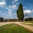 Cypress Tree on Circus Maximus, Ancient Roman Stadium near Palat — Stock Photo #36564525