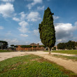 Cypress Tree on Circus Maximus, Ancient Roman Stadium near Palat — Stock Photo