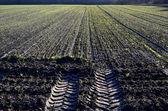Winter crop on a field. — Stock Photo