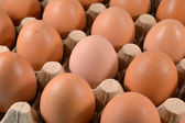 Egg carton with eggs. — Stock Photo