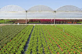 Nursery with greenhouses. — Stock Photo