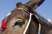 Donkey in Thira. — Stock fotografie