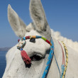 Donkey in Thira. — Stock Photo