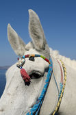 Donkey in Thira. — Stockfoto