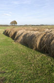 Rolled hay bales in the dunes. — Stock Photo