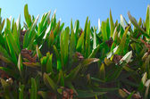 Succulents. — Stock Photo