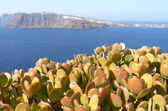 View with succulents of Thira at. — Stock Photo
