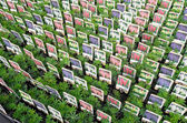 NETHERLANDS - VOORSCHOTEN - CIRCA APRIL 2014: Lupinus plants at wholesale. — Stock Photo